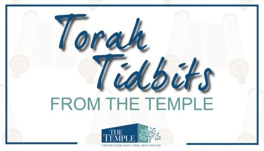 Torah Tidbits - Study Judaism with Rabbi Rapport and Rabbi David.